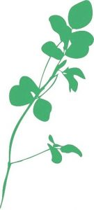 Saskatchewan Alfalfa Seed Producers Development Commission